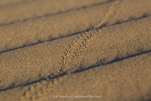 beetle tracks - val in real life