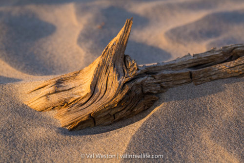 sand and wood - death valley