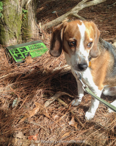 geocaching with dog - val in real life