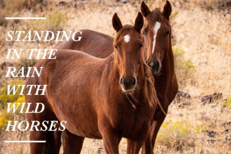 wild horses nevada - val in real life
